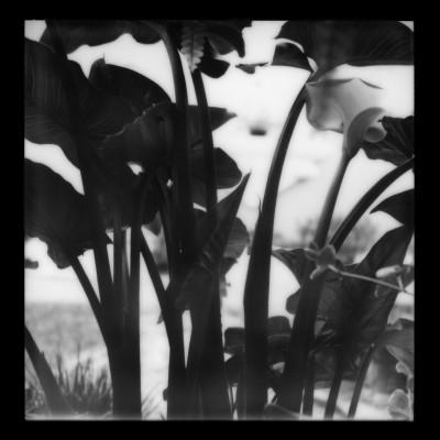 Polaroid2014-011