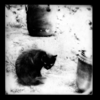 Polaroid2014-018
